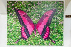 2D Butterfly Wall